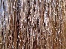 切れ毛が多い人は枝毛も多いと考えられます